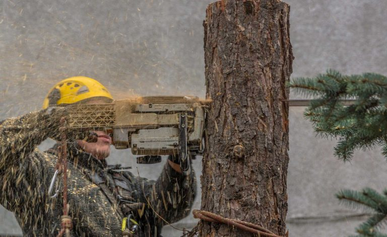 Infinity Tree Service Tree Trimming & Tree Removal Services