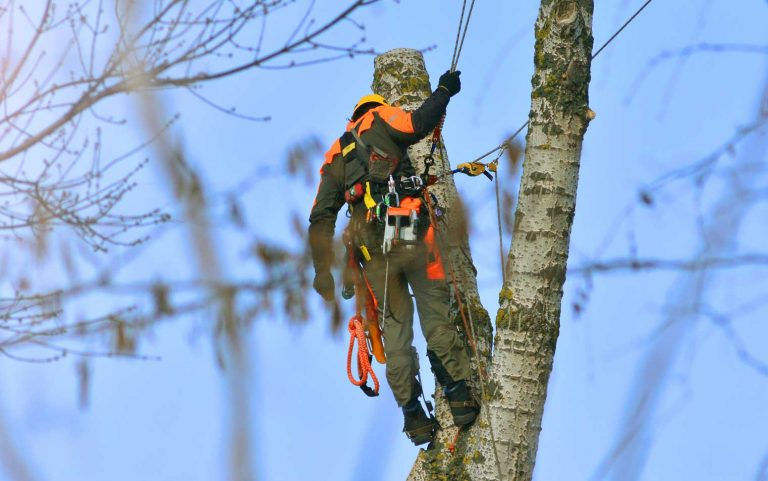 Professional tree removal in West Bloomfield Serving Oakland County Michigan